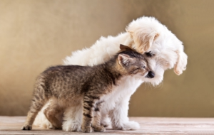 Cat & Dog HD Desktop