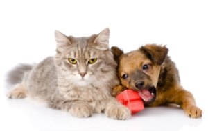Cat & Dog HD Wallpaper