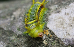 Caterpillar HD Wallpaper