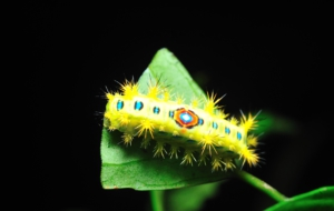 Caterpillar For Desktop