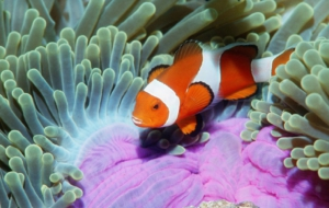 Clownfish Free Download