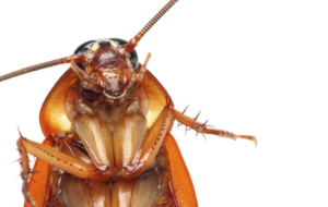 Cockroach Download Free Backgrounds HD