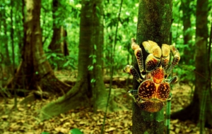 Coconut Crab Desktop