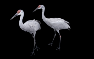 Crane Computer Backgrounds