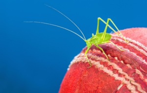 Cricket High Definition Wallpapers
