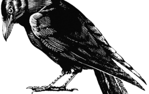 Crow Arts HD Background
