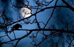 Crow Arts Wallpapers