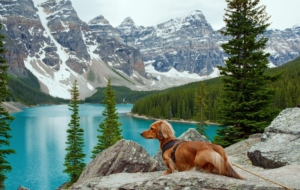 Dachshund High Definition Wallpapers