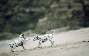 Dalmatian High Quality Wallpapers