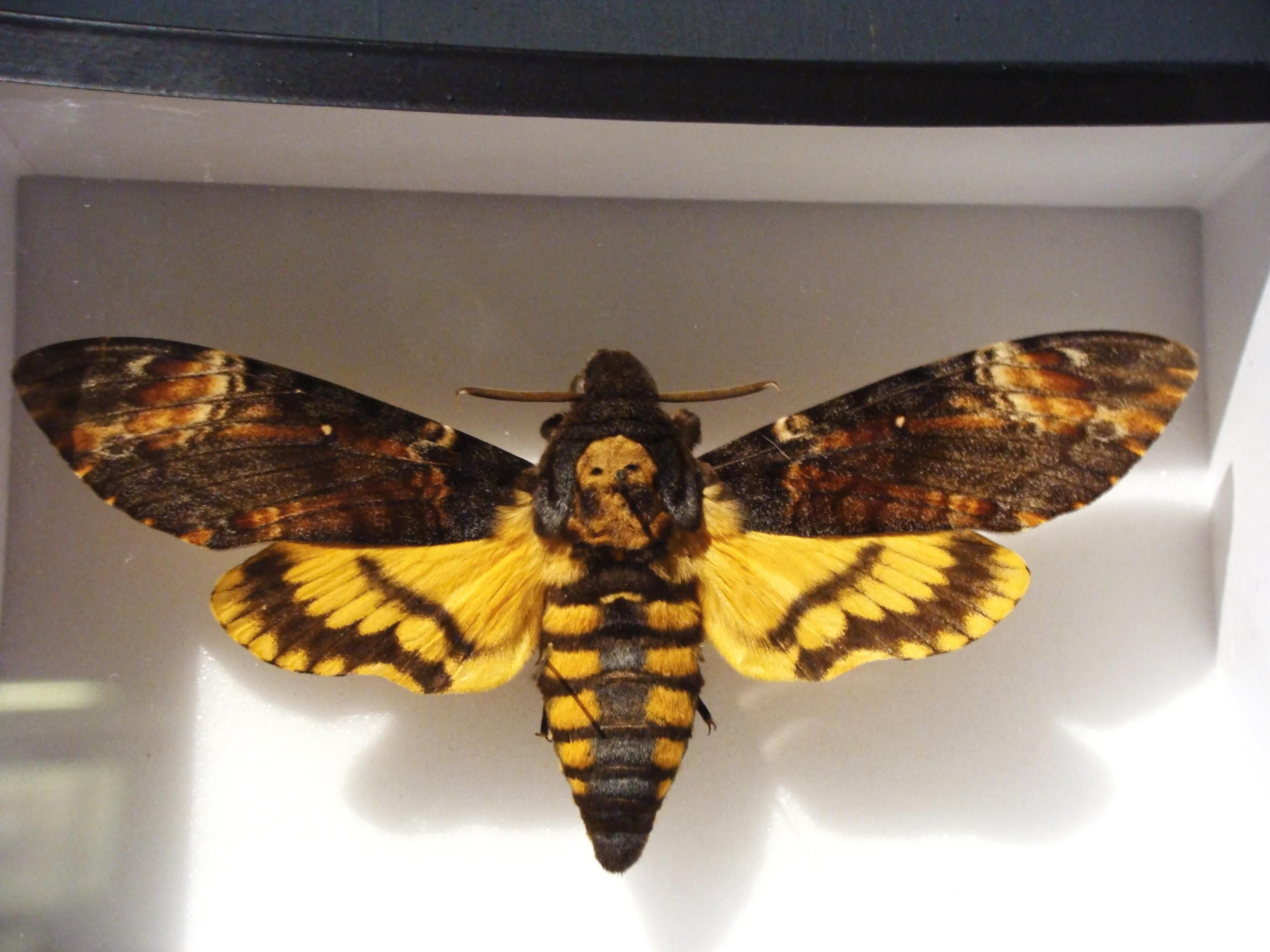 comparison of death of moth and transfiguration Free essay: living to die, or dying to live february 25, 1996 this essay was  originally written in february of 1996 for a composition class that i.