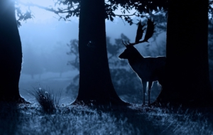 Deer Free Download