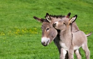 Donkey High Definition Wallpapers
