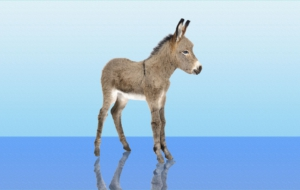 Donkey Wallpapers