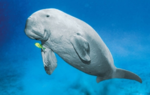 Dugong Download Free Backgrounds HD