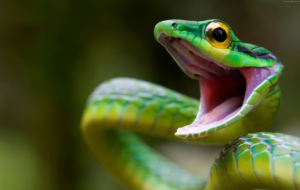 Eastern Green Mamba Full HD