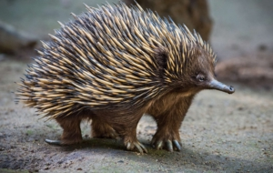 Echidna High Definition Wallpapers