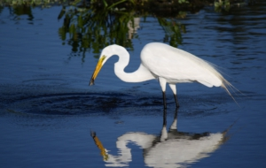 Egret High Definition
