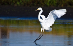 Egret For Desktop