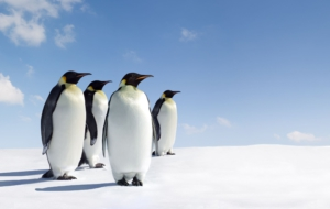 Emperor Penguin Download Free Backgrounds HD