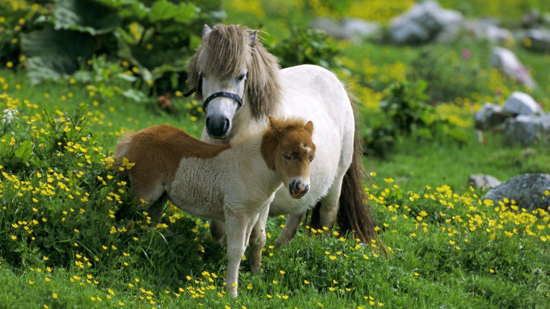 Hd Animals Wallpapers Free: Farm Animals Wallpapers Backgrounds