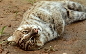 Fishing Cat Free Download