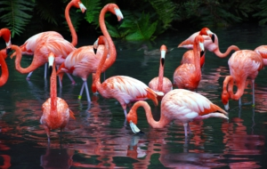 Flamingo Free Images