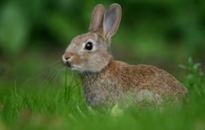 Hare Free HD Wallpapers