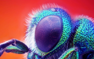 Insect Full HD