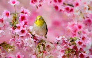 Japanese White Eye High Quality Wallpapers