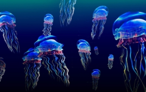 Jellyfish Background