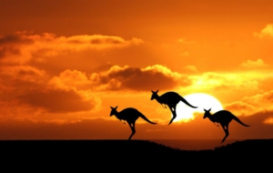 Kangaroo Computer Wallpaper