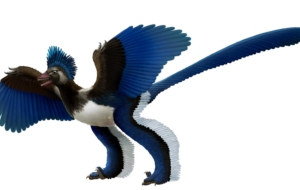 Pictures Of Archaeopteryx
