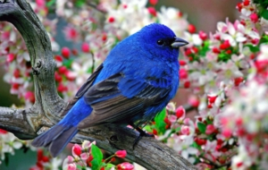 Pictures Of Bluebird