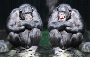 Pictures Of Bonobo