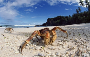 Pictures Of Crab