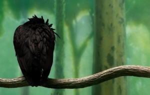 Pictures Of Crow Arts