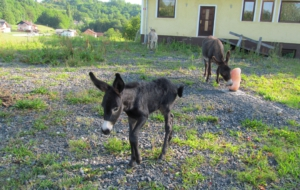 Pictures Of Donkey
