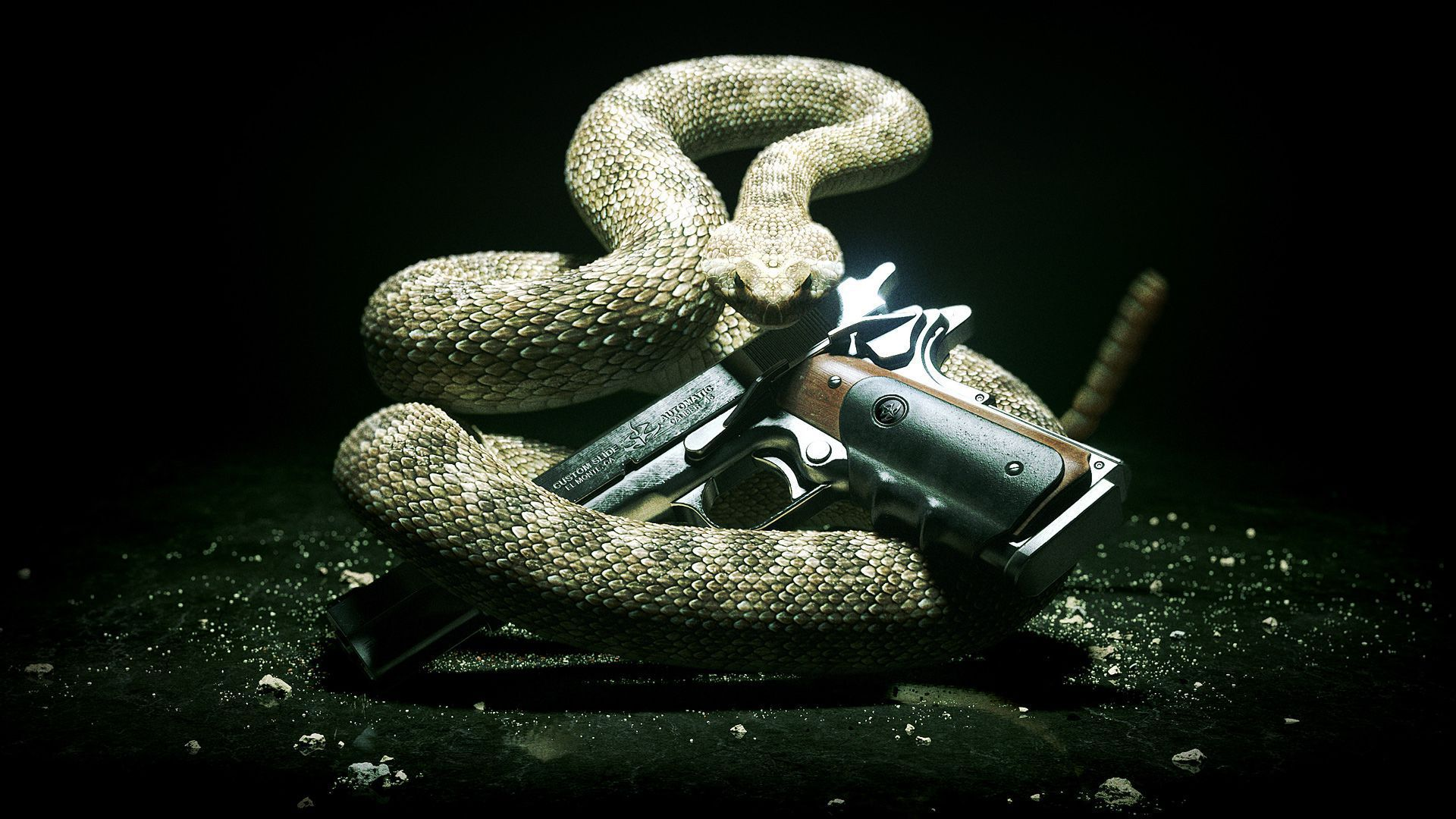 Anaconda HD Wallpaper