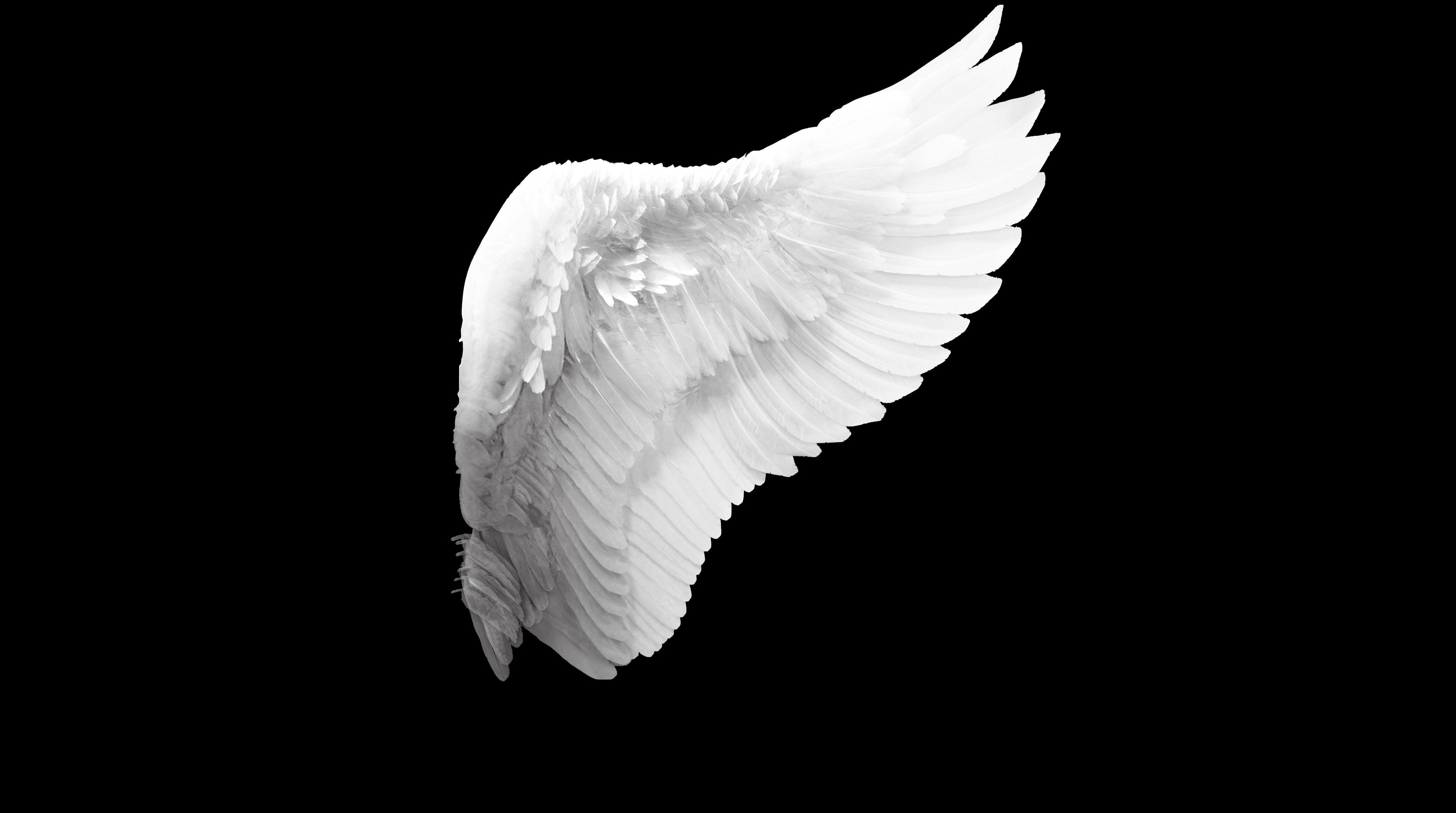 Angel Wings Wallpapers Backgrounds