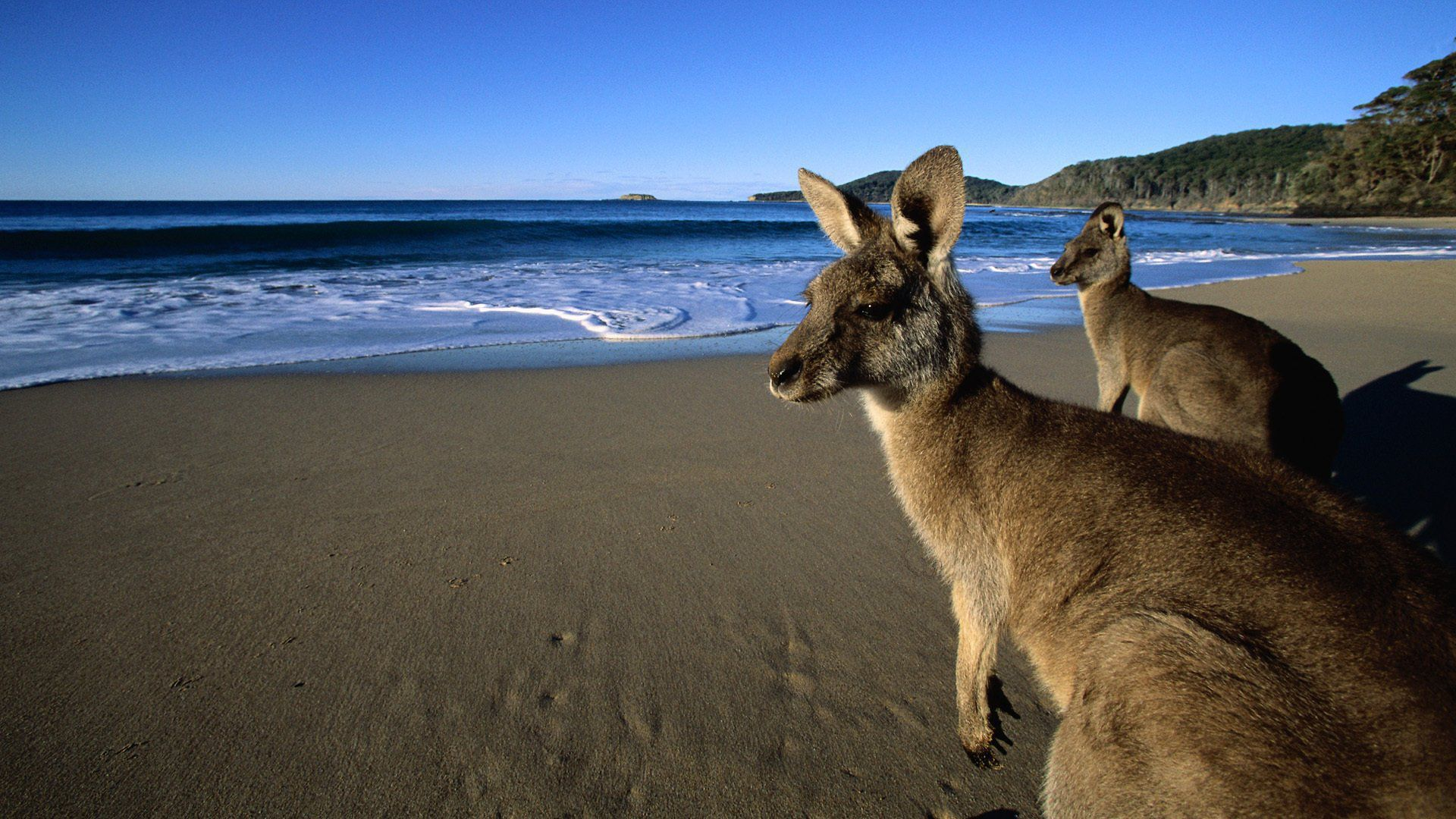 Australian Beach HD Background