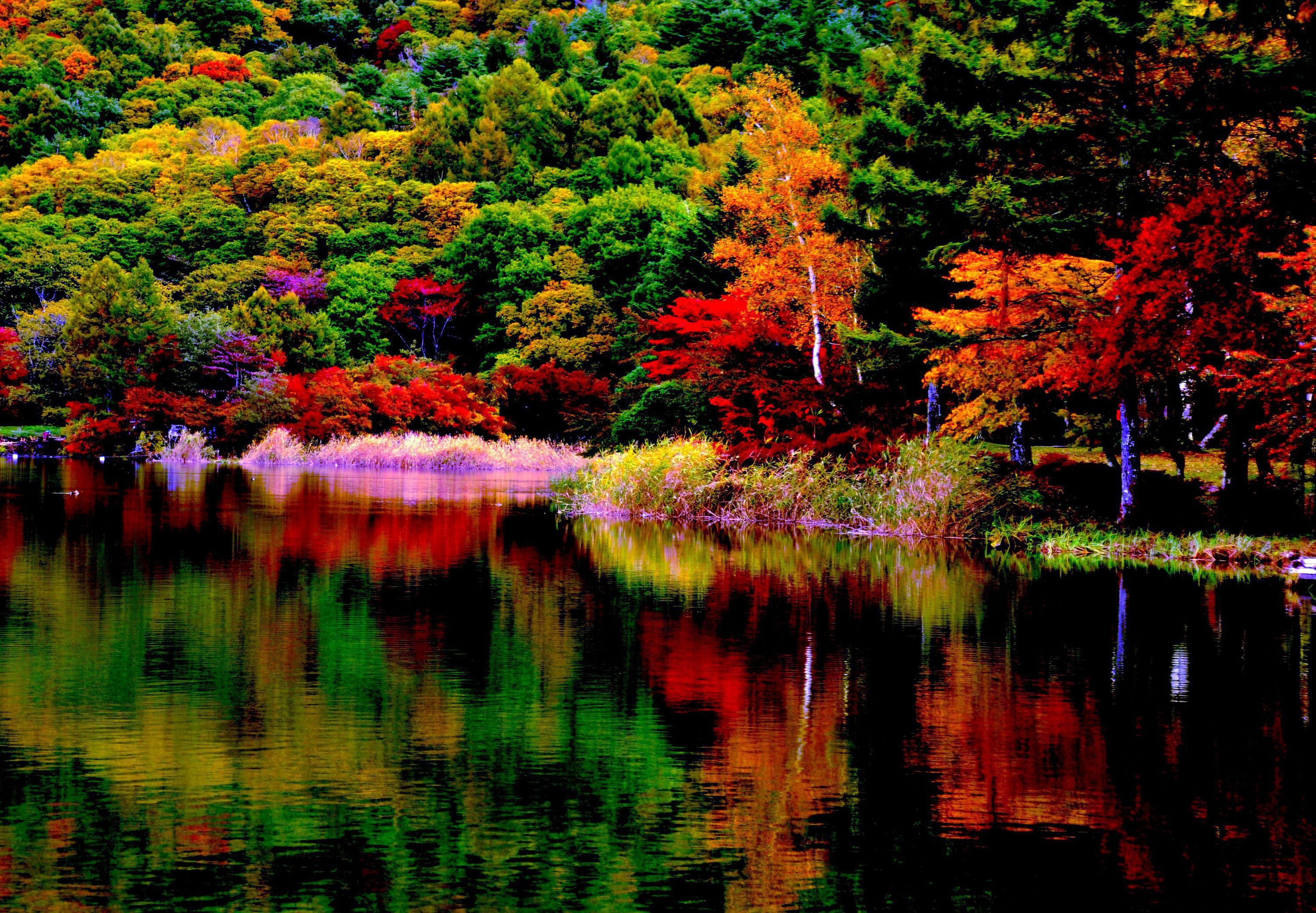 Autumn Forest Gallery