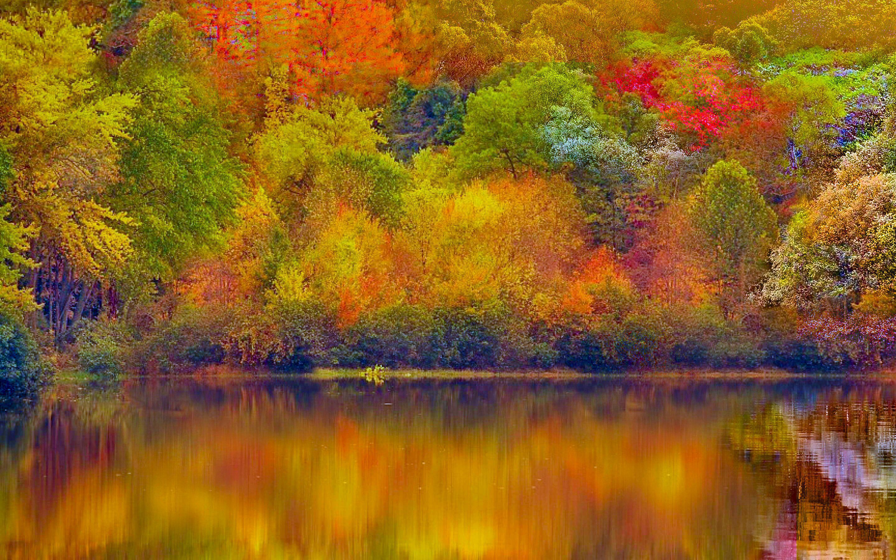 Autumn Forest Pictures