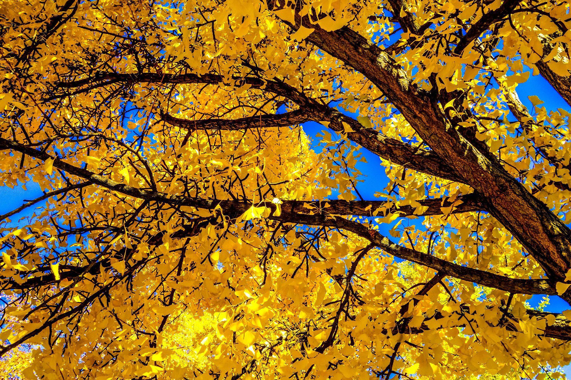 Autumn Leaves HD Wallpaper