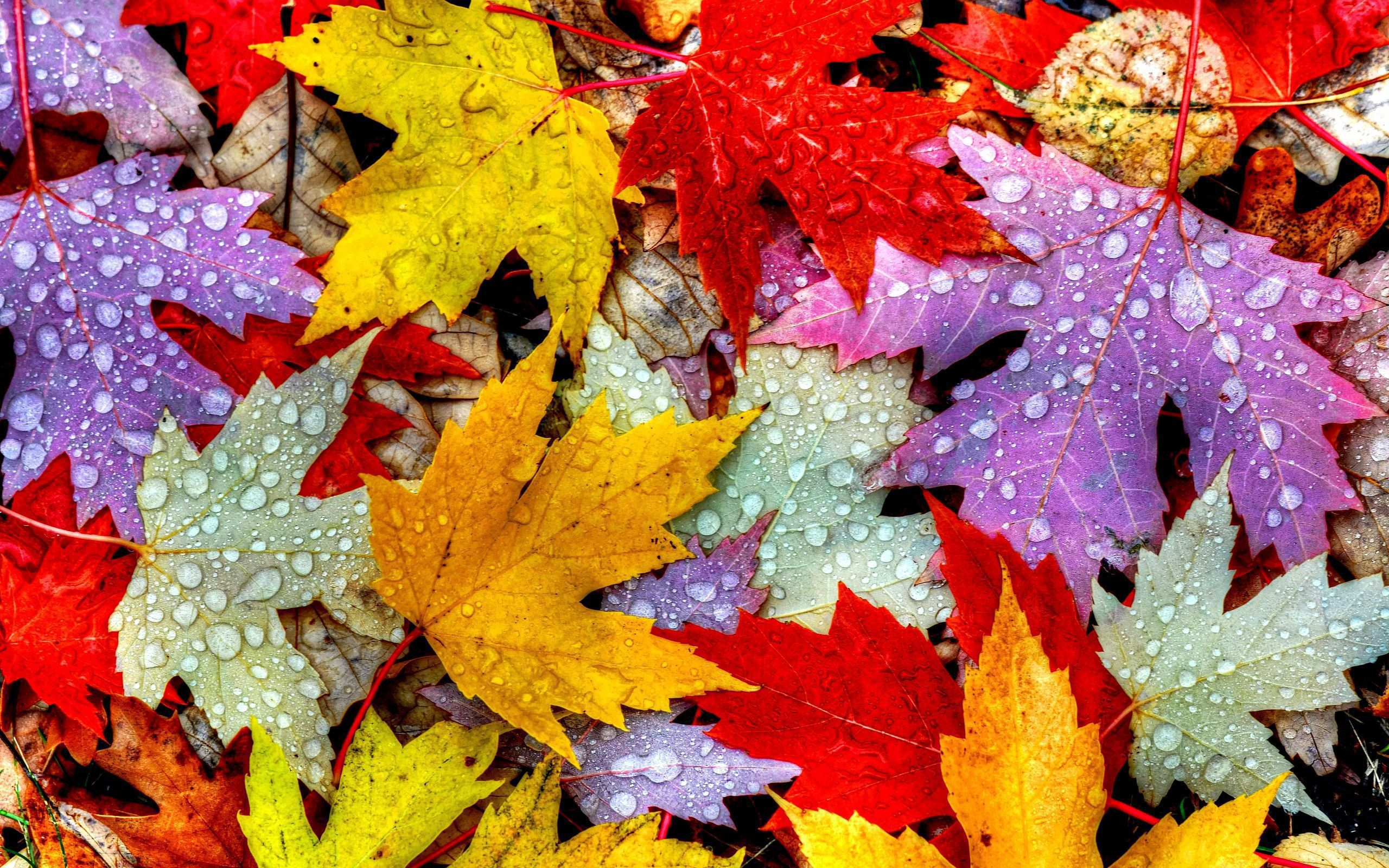 Autumn Leaves High Quality Wallpapers