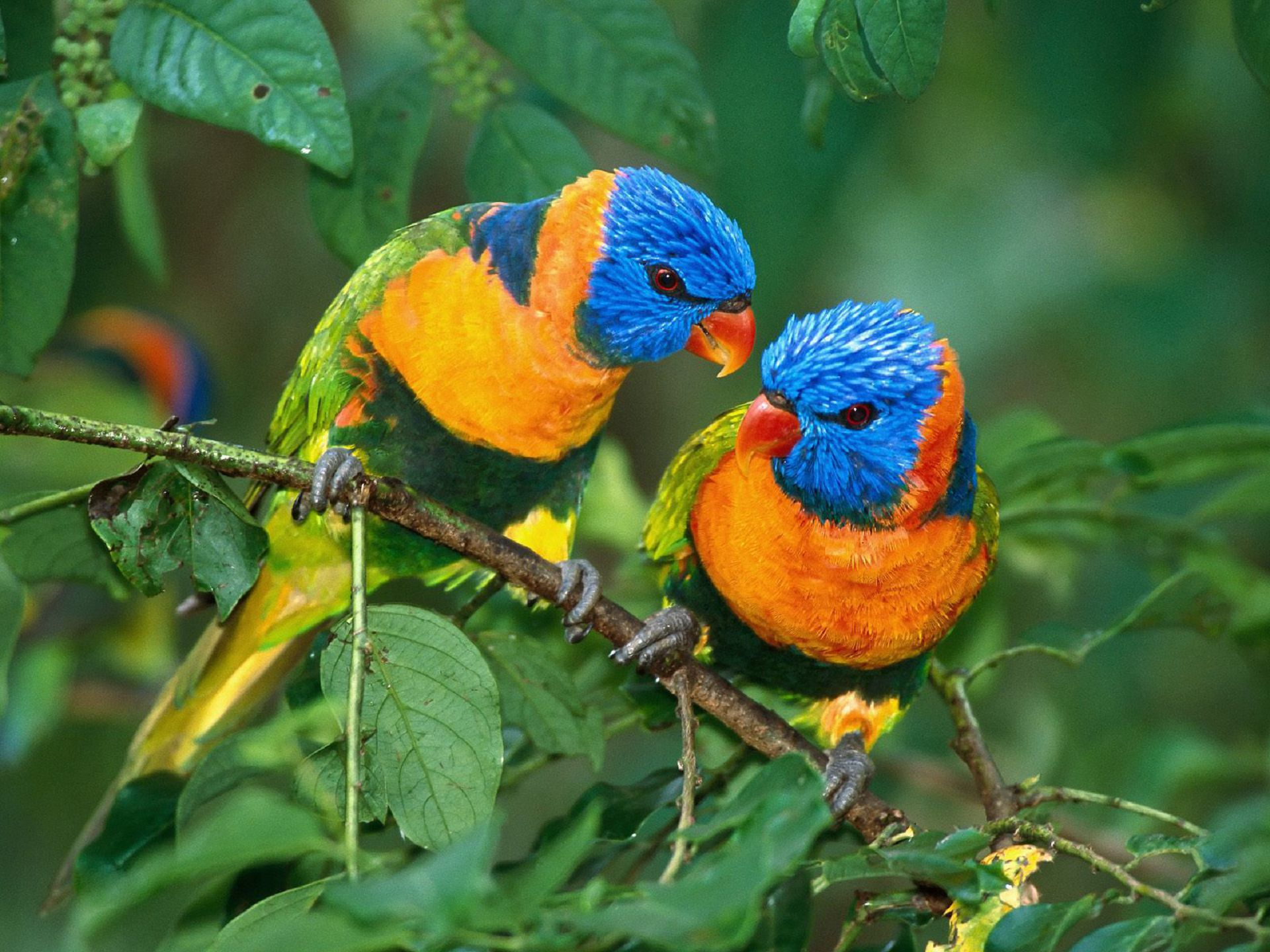 Aves Exoticas HD