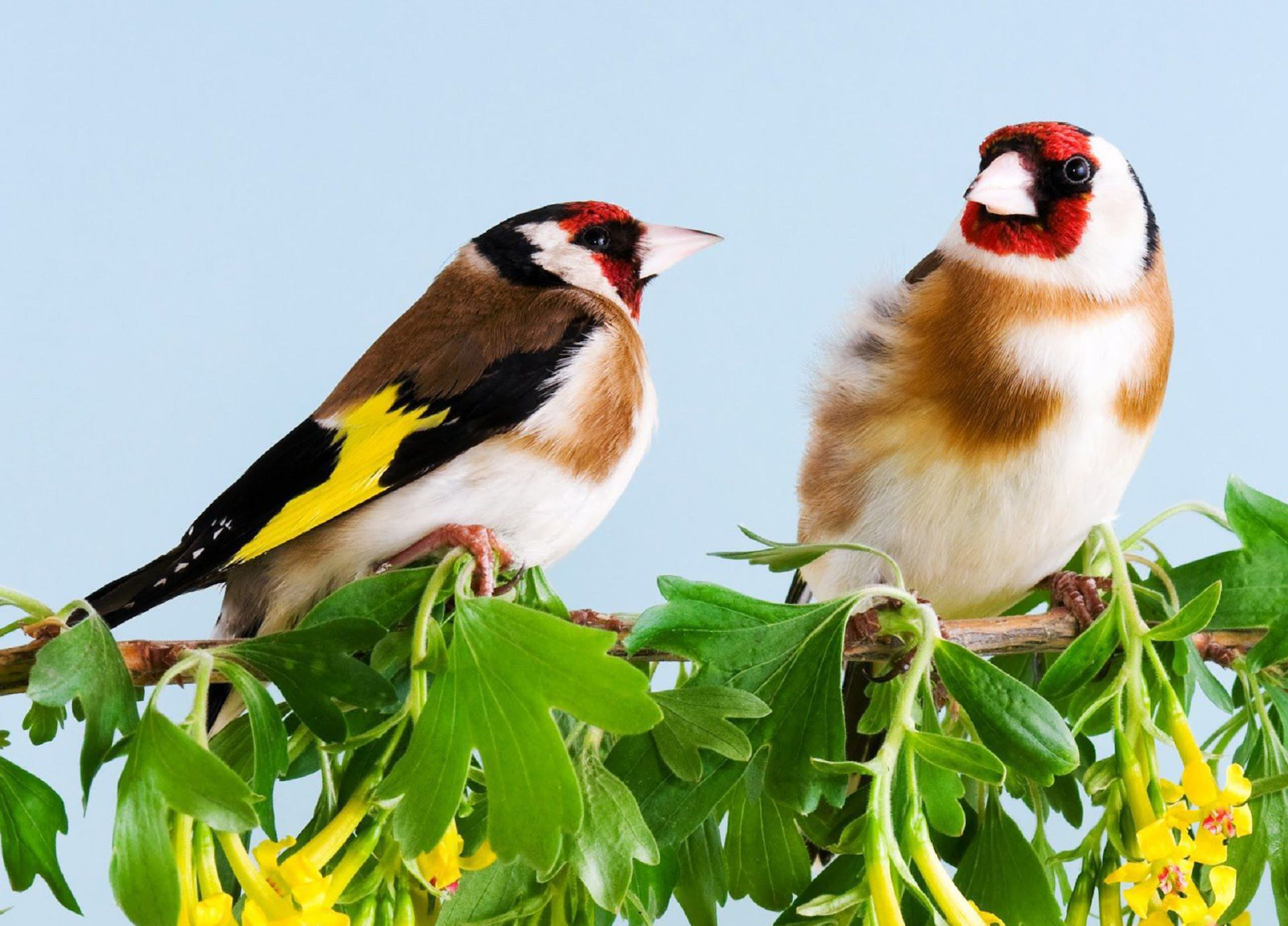 Aves Exoticas High Quality Wallpapers