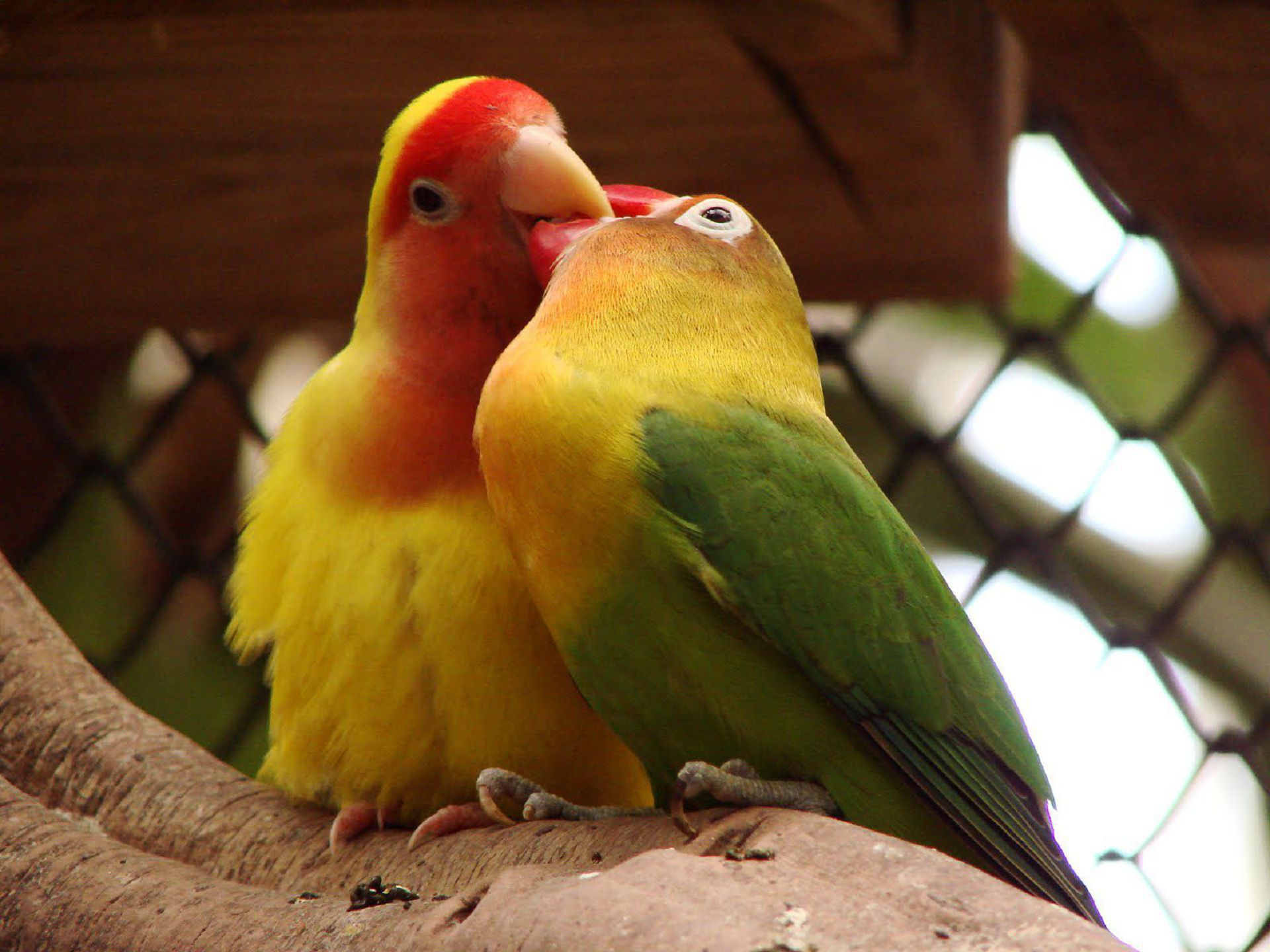 Aves Exoticas Images