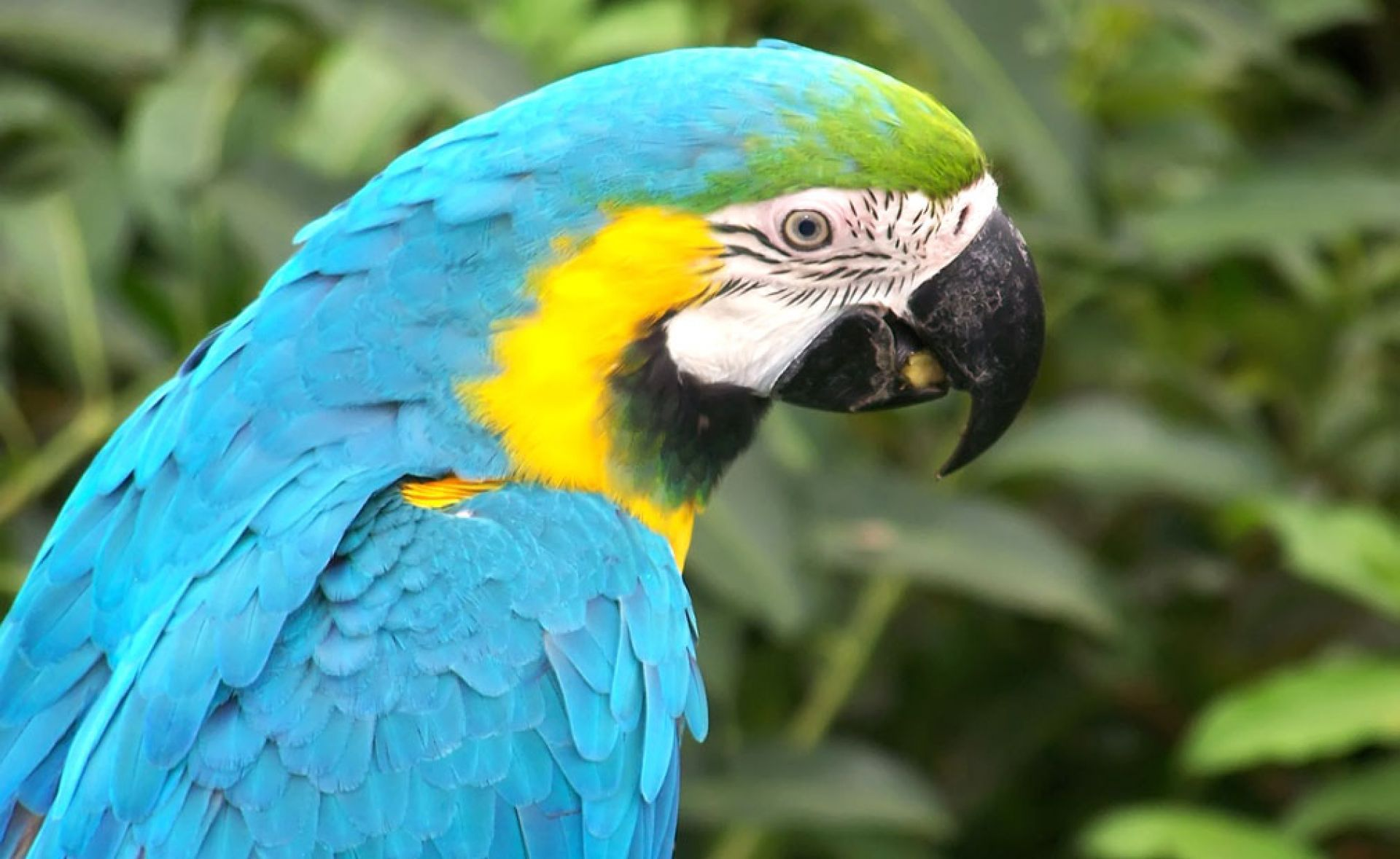 Aves Exoticas Wallpaper