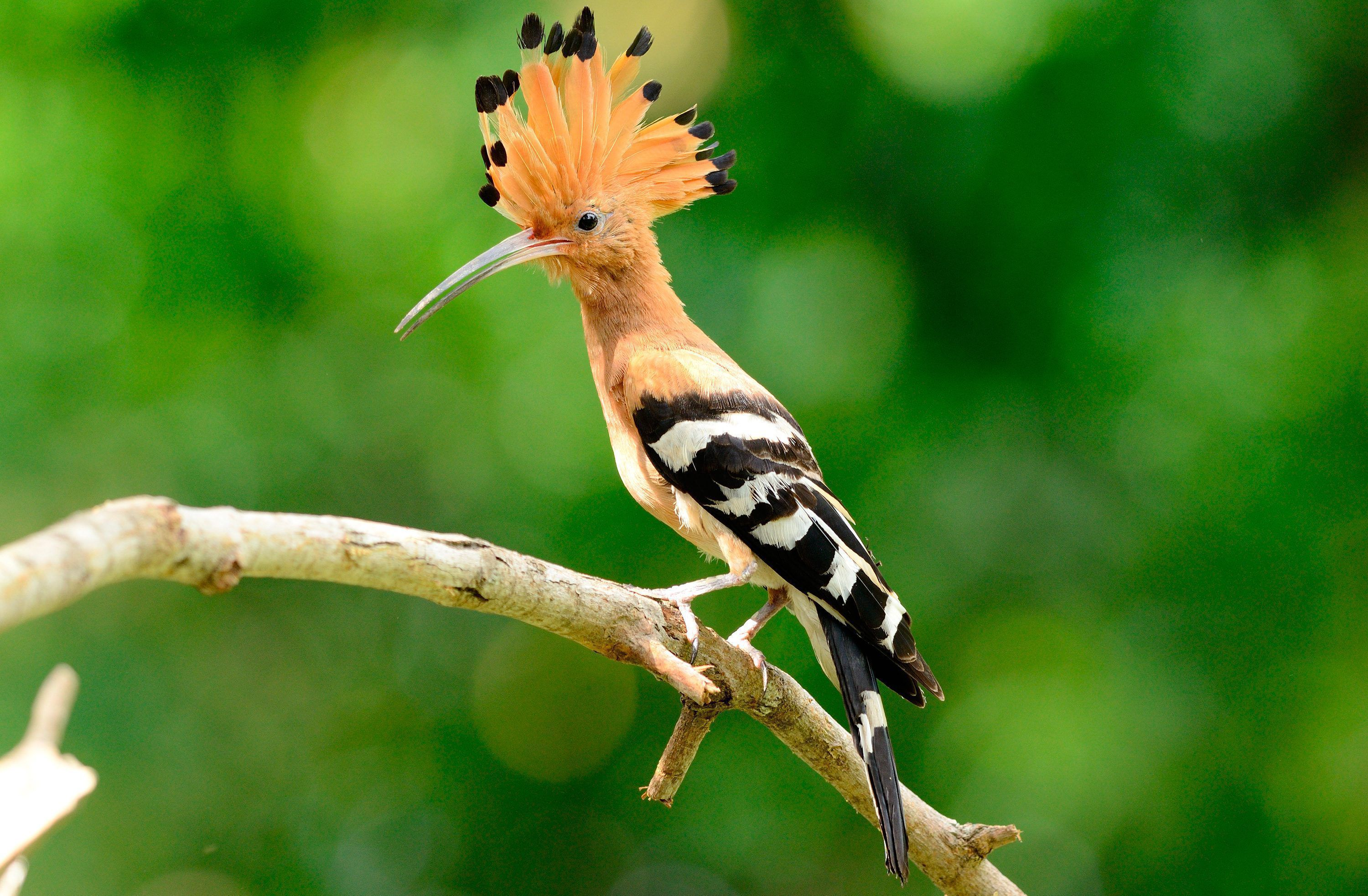 Aves Exoticas In High Resolution