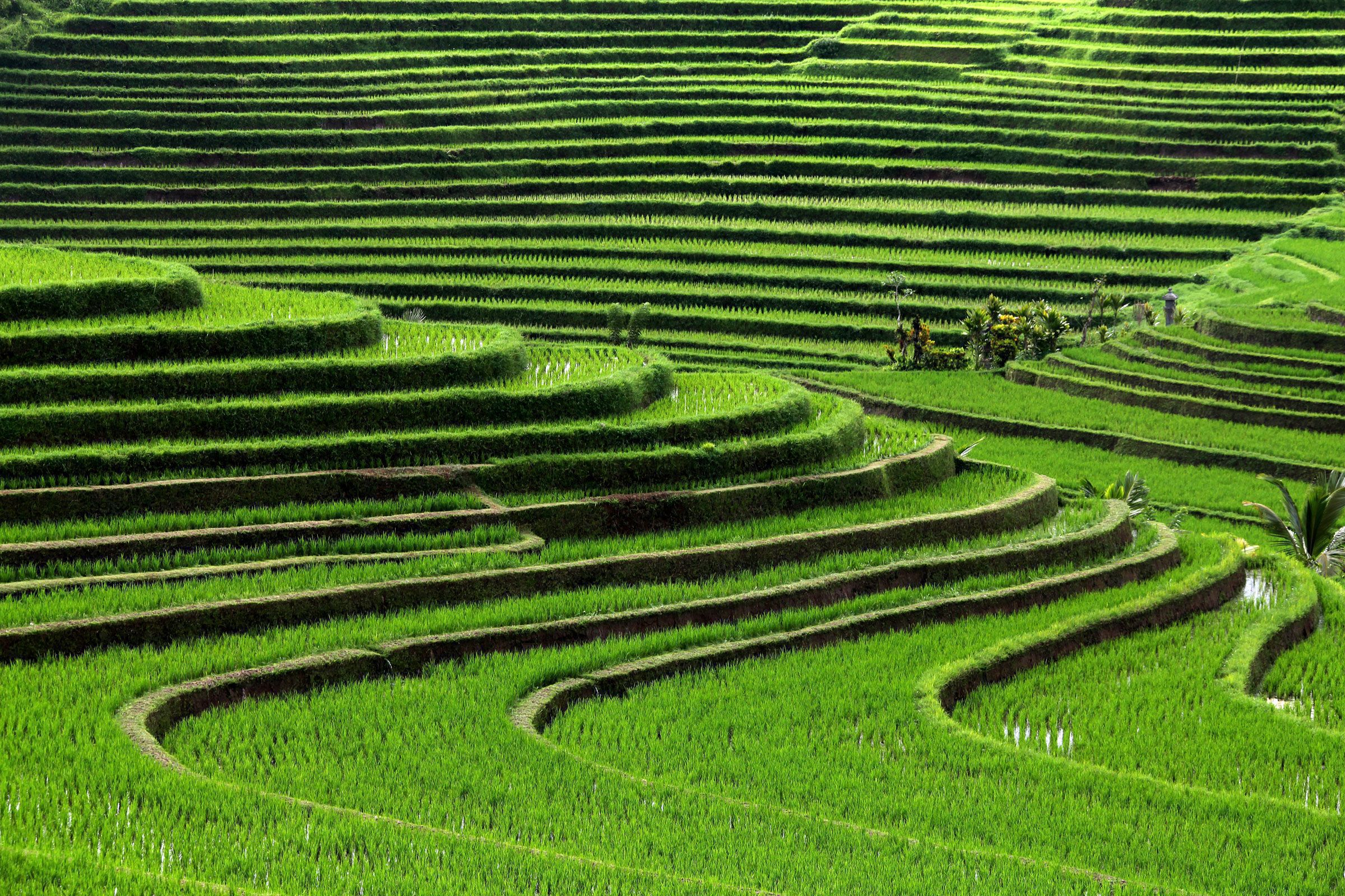 Bali High Definition Wallpapers